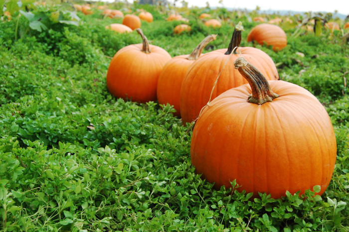 6. I can't wait to go to the pumpkin patch!