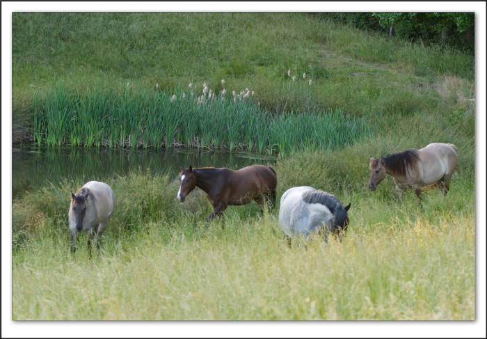 7. It doesn't get much more rural than four horses grazing in a pasture.