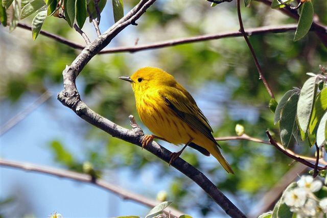 9. Take a look at this adorable yellow warbler also found at Trustom Pond.