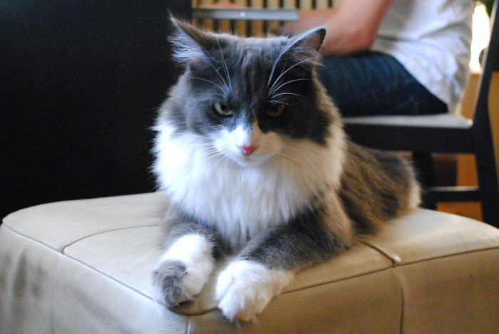10. Like most others, this Minneapolis cat is planning its future dominance over the human race.