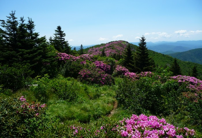 1. Roan Mountain