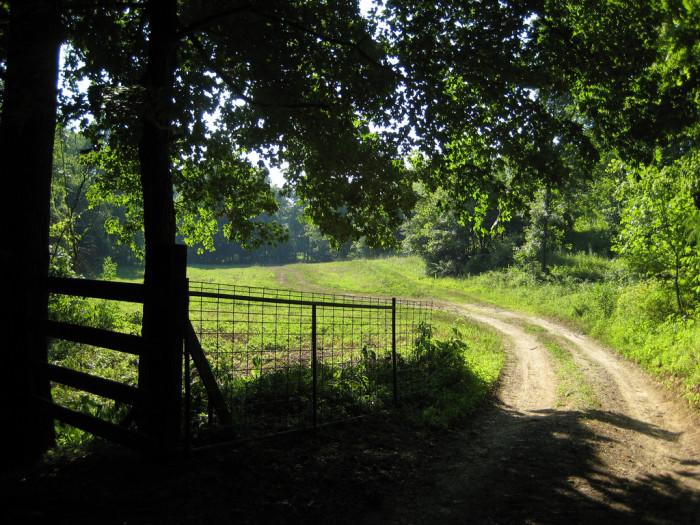 6.Road near Bollinger Mill