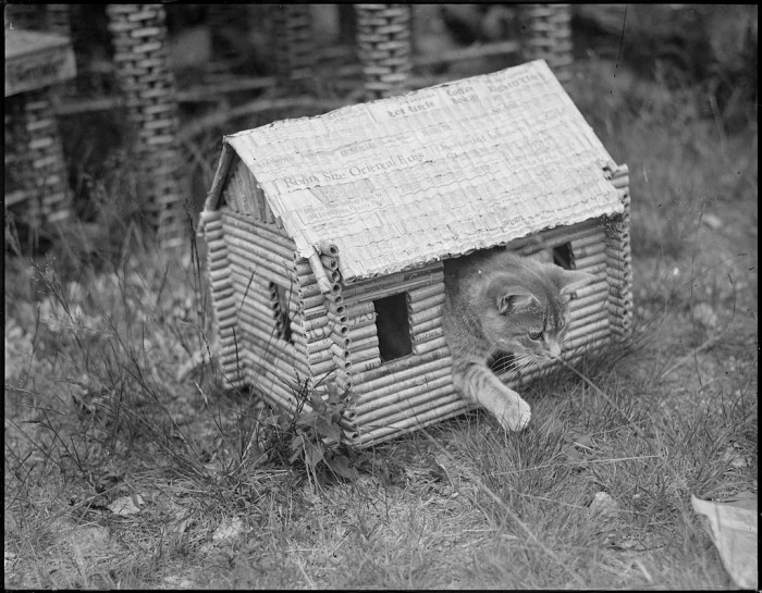 That incredible moment when you and your cat have matching houses.