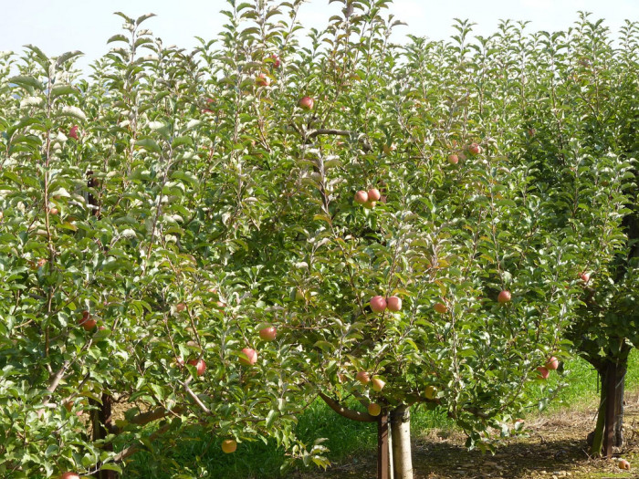 2. This apple orchard in Emmitsburg seems awfully inviting...