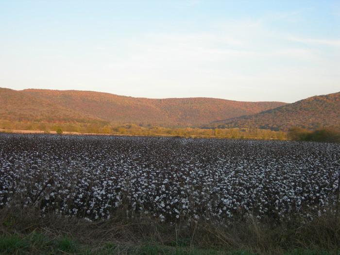 11. Paint Rock Valley Cotton Fields, located near Trenton, Alabama.