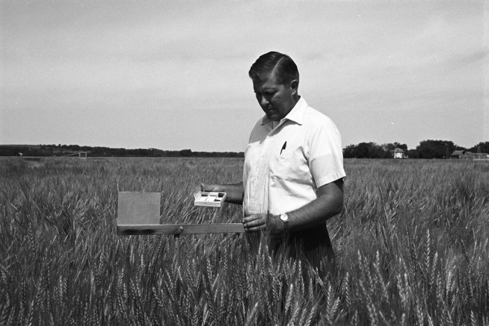 "6. ""A U.S. Department of Agriculture (USDA) Agricultural Research Service (ARS) scientist conducts field tests on wheat at the USDA testing facilities in Manhattan, Kansas in June 1973."""