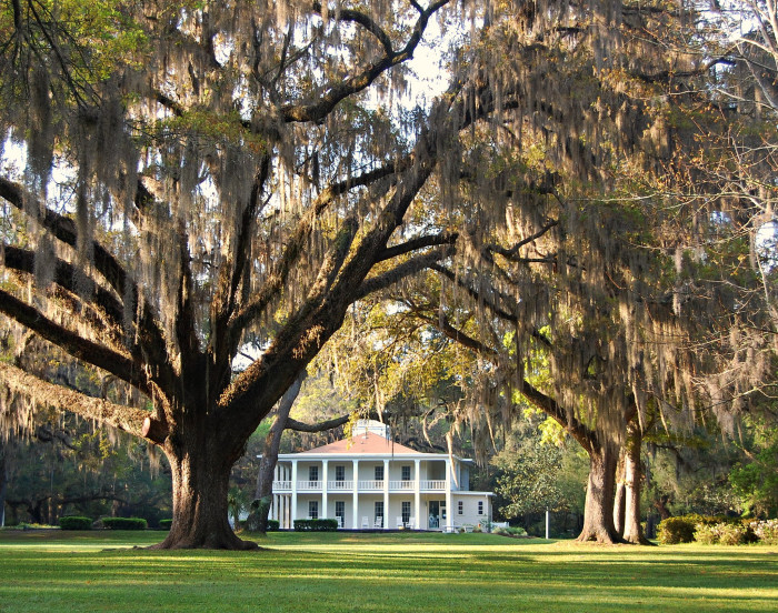 13. How about a stroll under the shade of majestic moss-covered oaks?