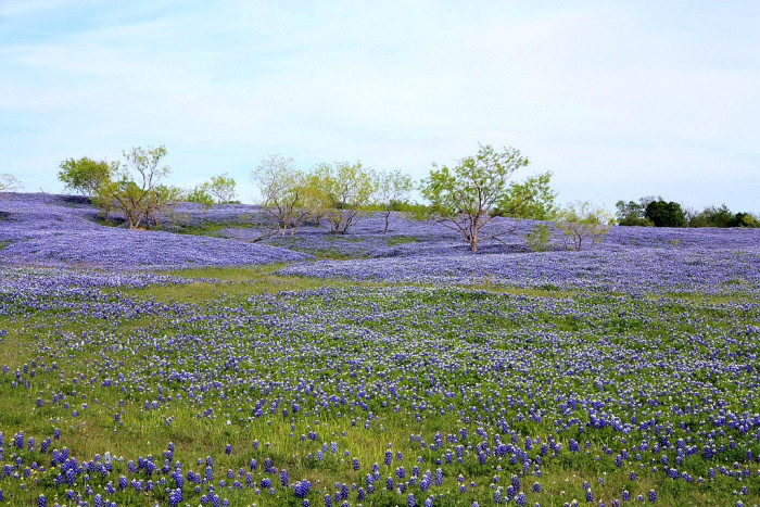 6. The most gorgeous wildflowers Texas has to offer.