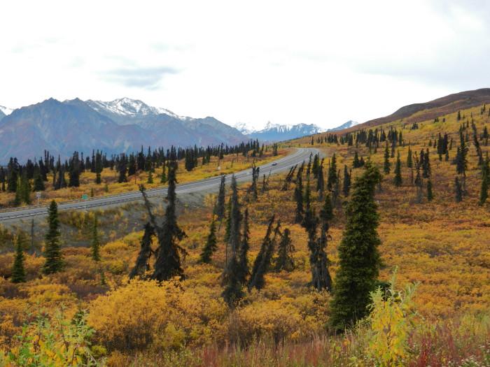5. Boreal Forest along the Glenn Highway