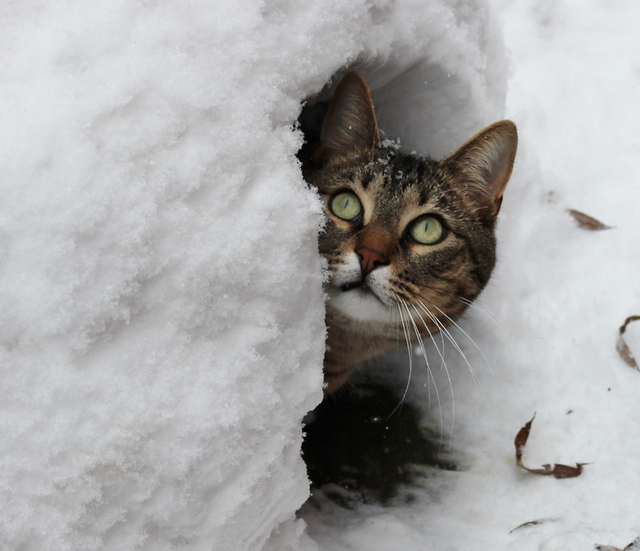 6. You must get a lot of snow. How do you deal with all of it?