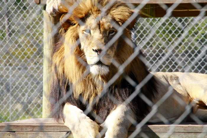 11. Alabama Gulf Coast Zoo - Gulf Shores, Alabama