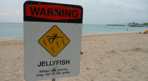Here Are The 15 Biggest Risks Living In The State Of Hawaii