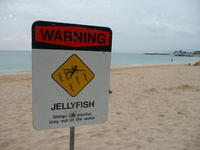 7. Being attacked by a shark, or stung by a jellyfish.