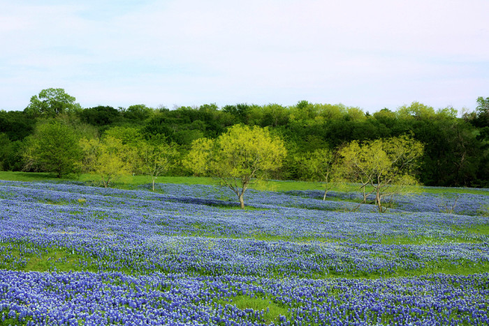 1. Drive the bluebonnet trail in the hill country