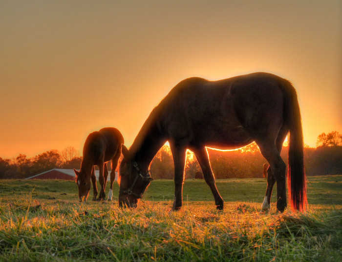 2. A spectacular shot of a horse farm in Colts Neck.