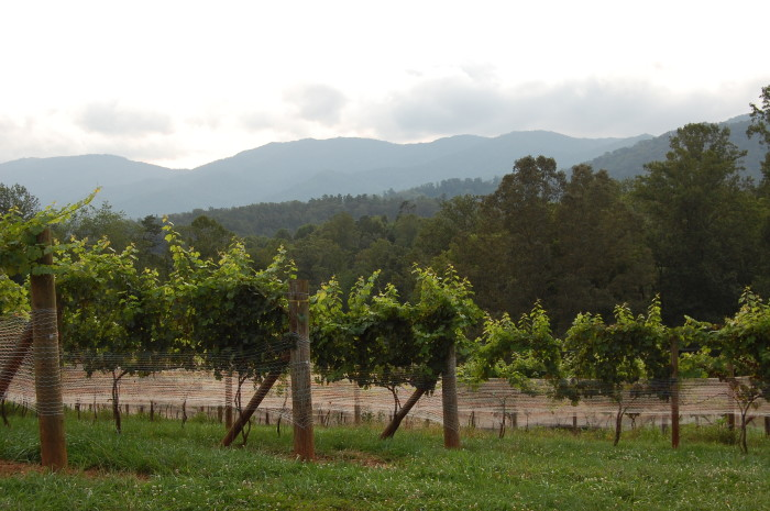 10. North Carolina has an abundance of beautiful vineyards and wineries. Perfect for a relaxed Sunday wine tasting.