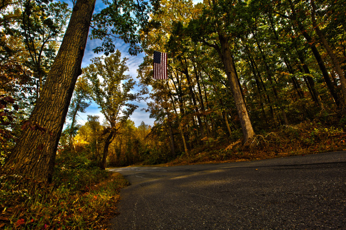 11. Towering trees and a patriotic symbol in Odenton.