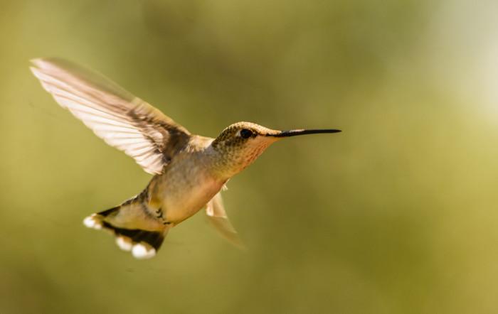 4. Arizona is a birding paradise.