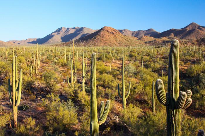 15. Saguaro National Park