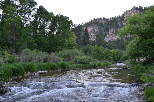 Creek in Spearfish Canyon