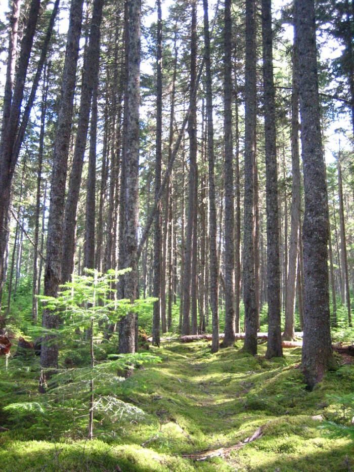 8. The Allagash Wilderness Waterway