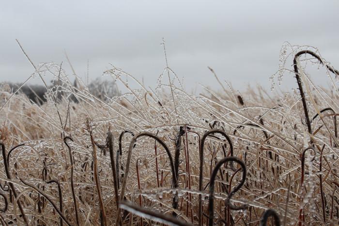 Ice covered prairie - spots in south dakota