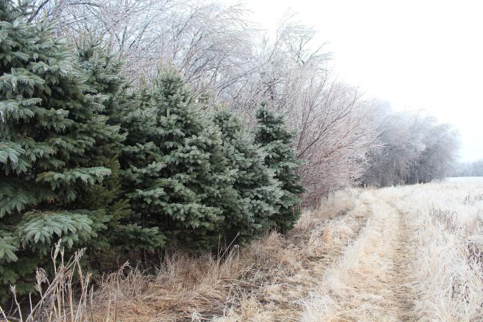 A bit of green in winter - spots in south dakota