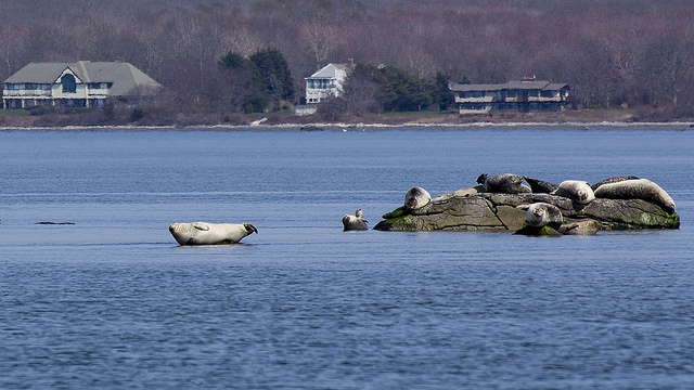 7. These harbor seals taking in the sun in North Kingstown set up an amazing photograph!