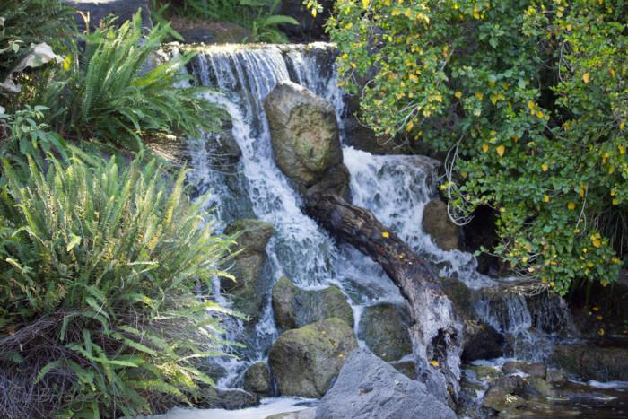6.  Los Angeles County Arboretum and Botanical Garden