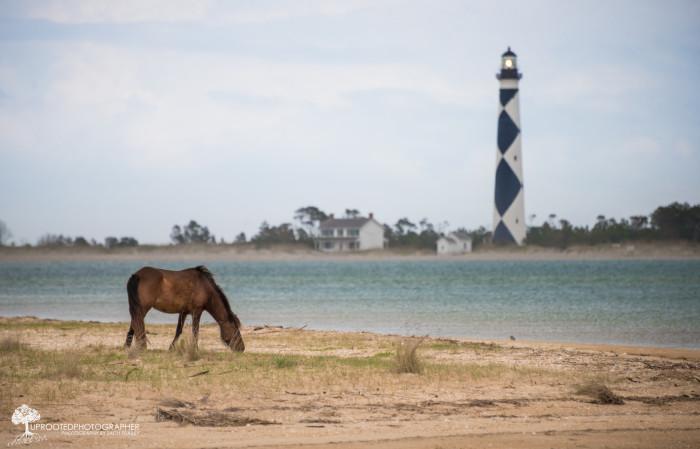 10. Cape Lookout