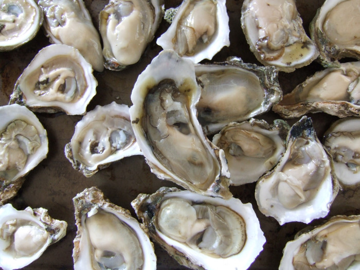 8. Apalachicola Oysters