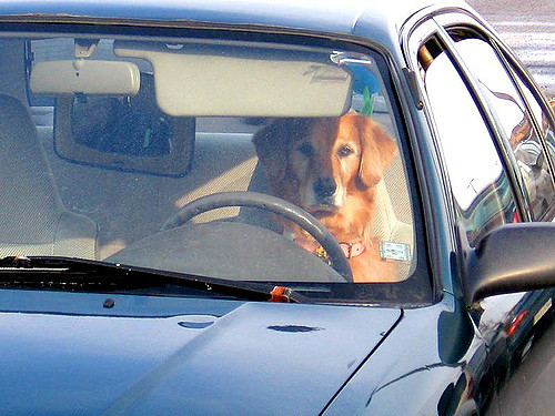 """3. You'll hear them calling any drive lasting more than 15 minutes a """"road trip"""" and they won't be amused."""
