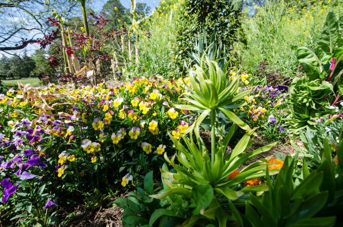 10. Norfolk Botanical Garden