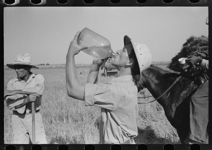 1. Rice farmer drinking in the fields, Crowley