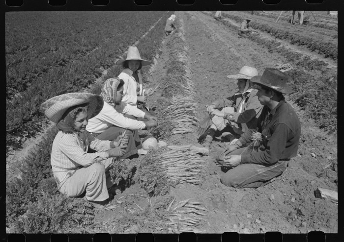 5. Once all the picking was done, the next step was to sort and prepare the harvest for sale. Here, another set of workers gather and bunch carrots on a farm in Yuma.