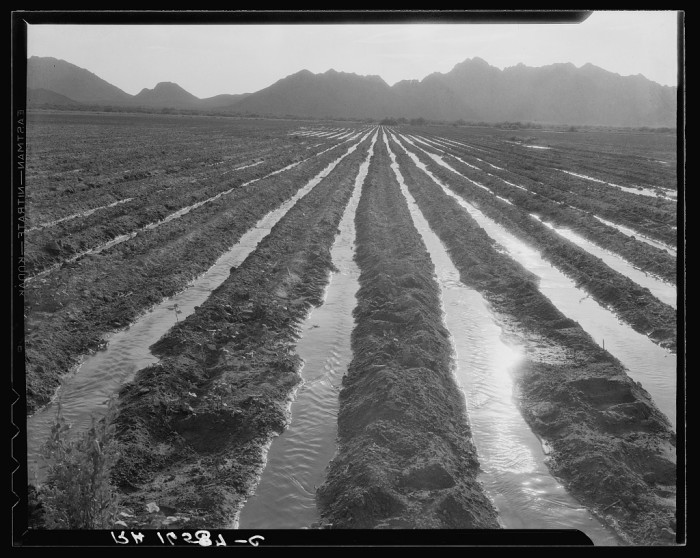 1. This is a cotton field being irrigated in May 1937. Cotton was one of the more prolific agricultural industries and still is today.