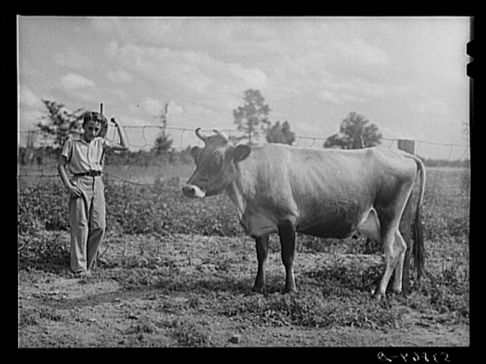 11. West Carroll Parish, Louisiana, June 1940