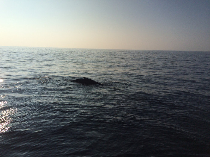 9) Wait, is that a whale?