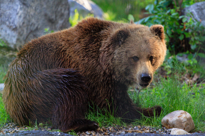 12. Then you're probably in bear country.