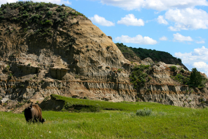 6. Bison grazing near a mighty hill in Theodore Roosevelt National Park.