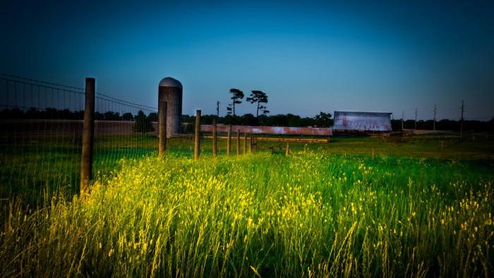 5. Fairhope Dairy Road Farm, located south of Fairhope, Alabama.