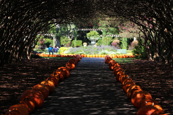 13. Walk through the Dallas Arboretum