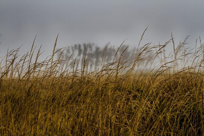 6. Ticks lurking in tall grasses