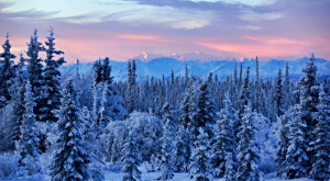 12 Surefire Signs You Definitely Belong In Alaska