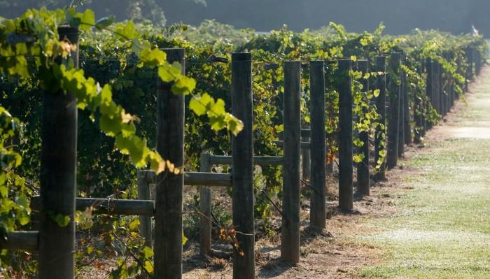 11. Visit one of Alabama's amazing vineyards.