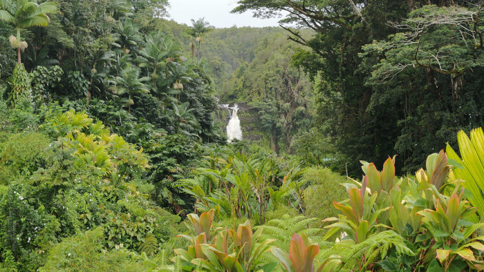 The magnificent waterfall can be viewed at several points throughout the forested loop trail to Akaka Falls.