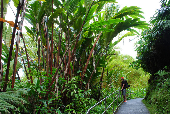To reach the falls, you will take a 0.4 uphill walk through a lush rainforest full of bamboo groves, wild orchids, and draping ferns.