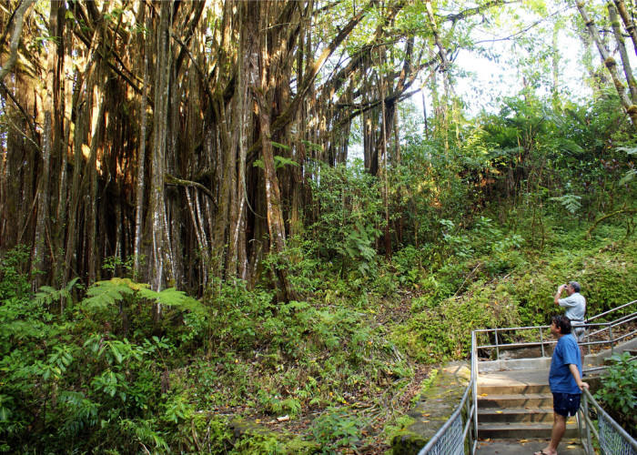 The lush, tropical vegetation that surround you on the stroll to the falls is quite refreshing.