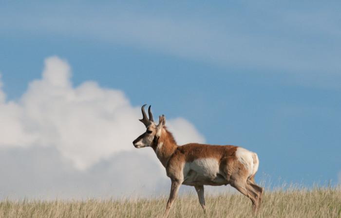 5. Speed goat