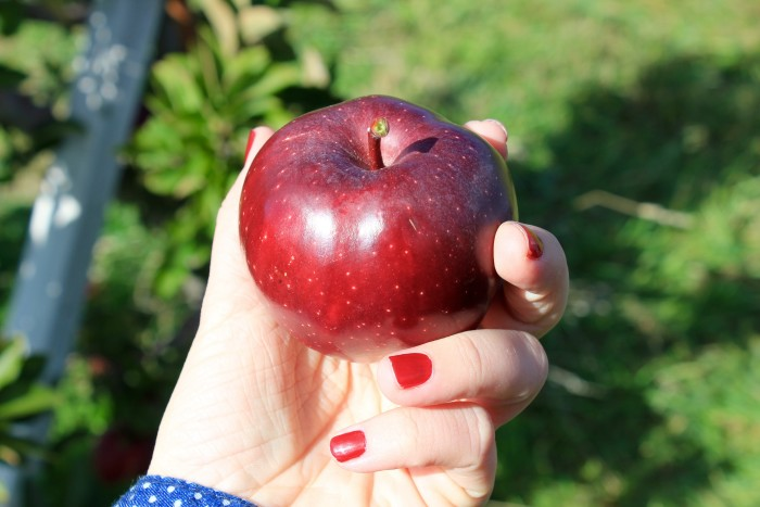 2. Speaking of Apples...you'll love our Apple Picking!